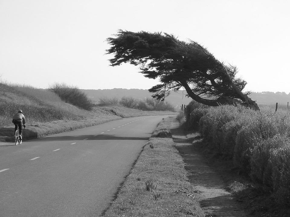 tree-1667_960_720